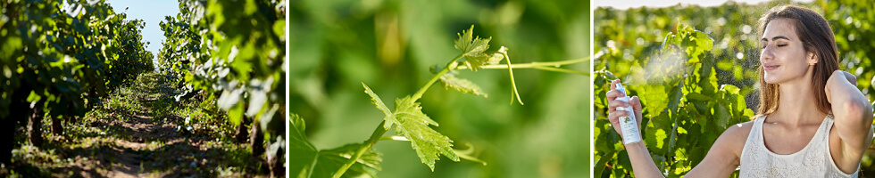 VignesLoireSite